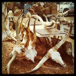Longhorn skulls for sale at Antique Alley Texas. (photo by Tui Snider)