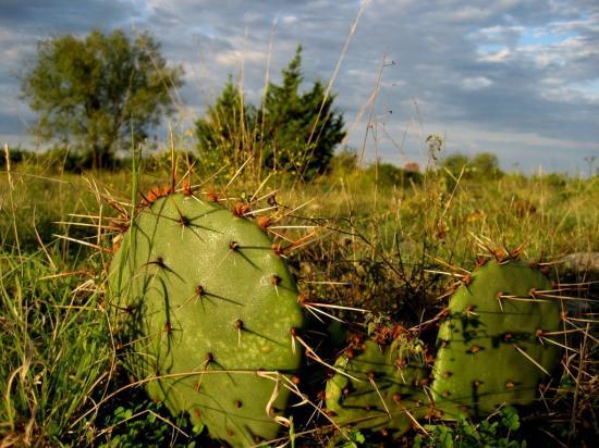 cactus-camping
