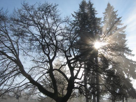sunny-trees