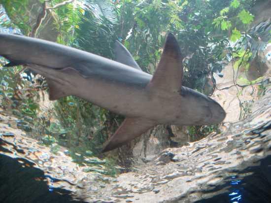 Shark Gazing At The Dallas World Aquarium Tui Snider