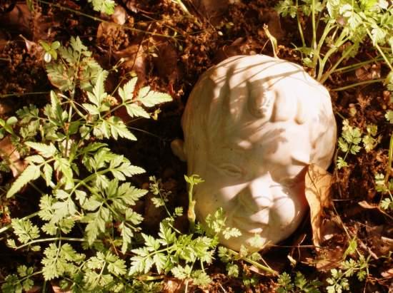 Garden baby face