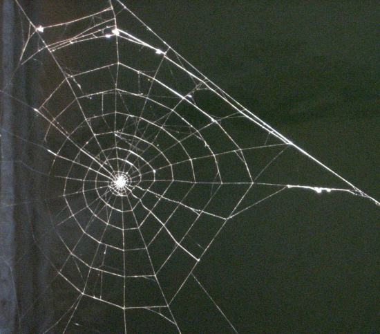 Spider web down at the docks - photo by Tui Cameron