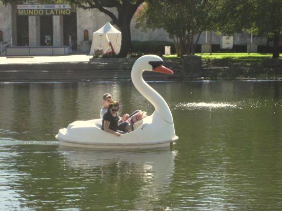 Mallard and Swan paddles boats at Fair Park. Photo by Tui Cameron.
