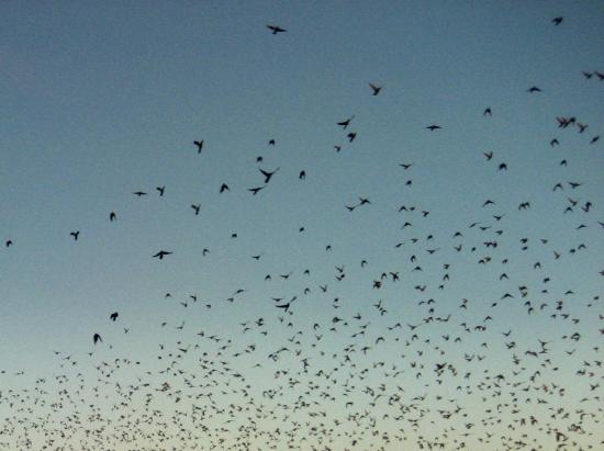 Scattering birds. Photo by Tui Cameron