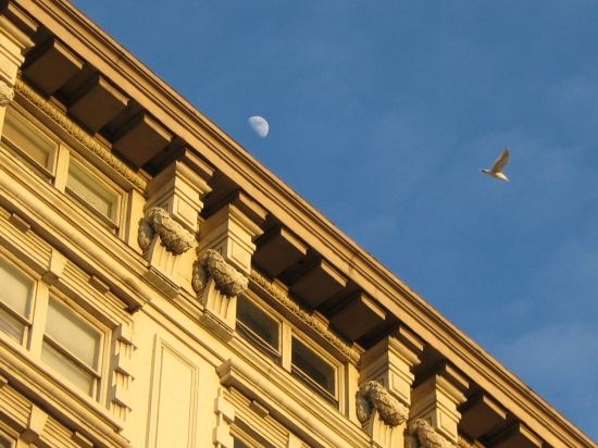 Building, bird, moon. Photo by Tui Cameron