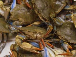 Live crabs at Nguyen Loi Oriental Supermarket in Haltom City, Texas
