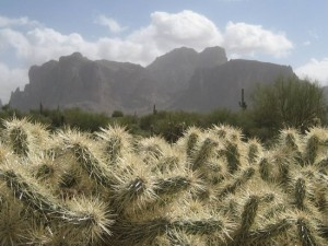 Mt Superstition with cholla cactus in the foreground. (photo by Tui Cameron)