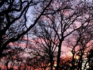 Sunset through oak trees. (photo by Tui Cameron)