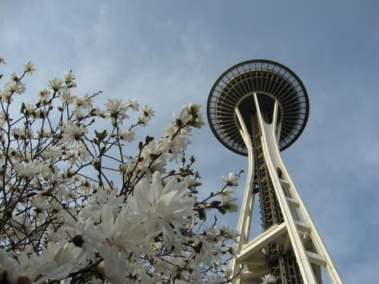 Seattle Space Needle with blossoms. (photo by Tui Cameron)