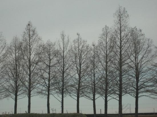 Bare branches. (photo by Tui Snider)