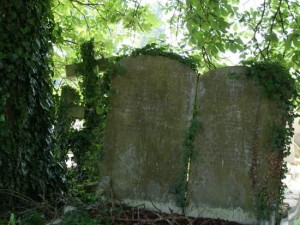 Parts of Kensal Green Cemetery are overgrown. (photo by Tui Snider)