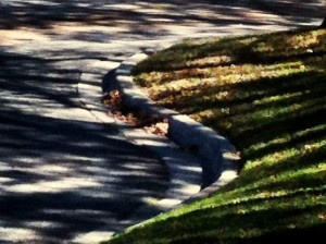 Shadows and the curve of our street. (photo by Tui Snider)
