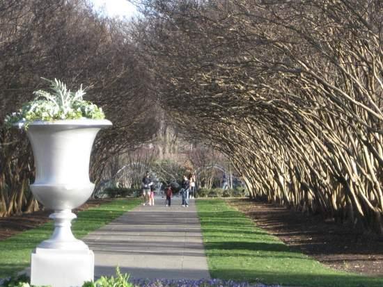 Dallas Arboretum Crape Myrtles. (photo By Tui Snider)
