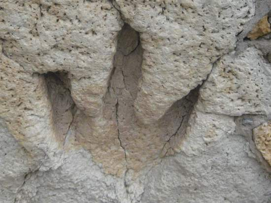 Dinosaur footprint in Glen Rose, TX ©Tui Snider