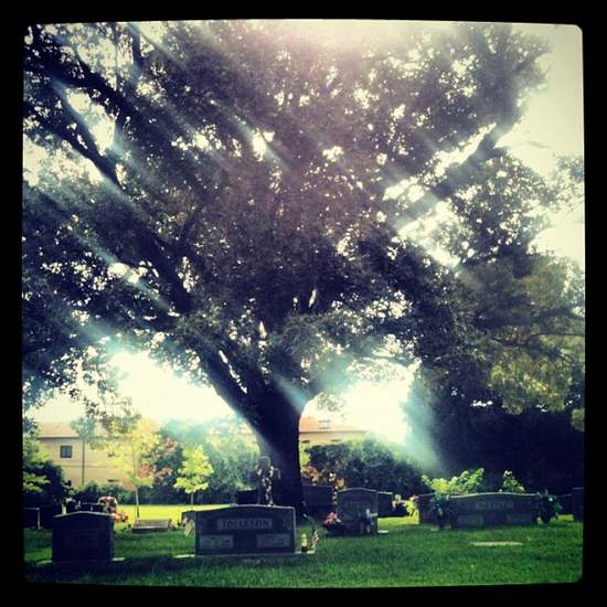 Beautiful trees at the Athens, TX cemetery. (photo by Tui Snider)