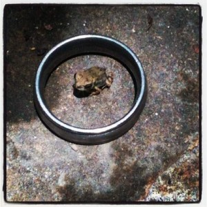 Tiny frog at Chandor Gardens in Weatherford, Texas (photo by Tui Snider)