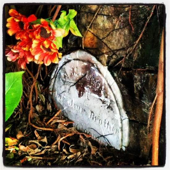 Overgrown headstone (photo by Tui Snider)