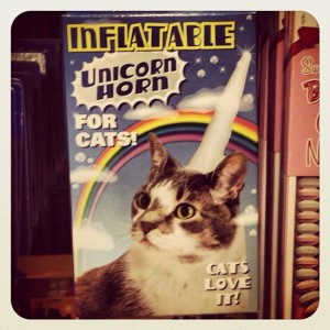 Inflatable unicorn horn for cats. (photo by Tui Snider)