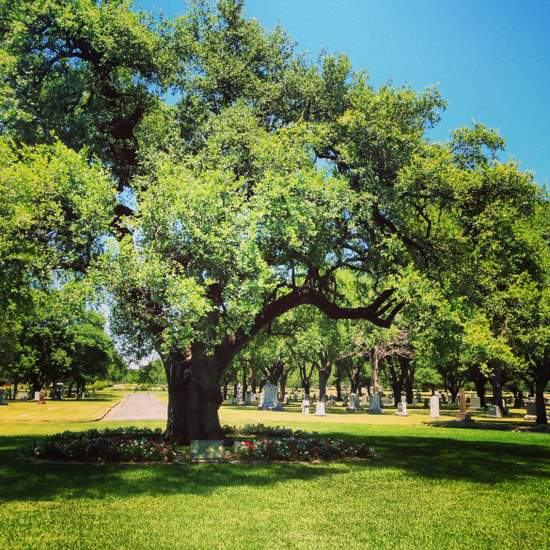 Famous texas tree the turner oak in fort worth tui snider famous texas tree turner oak in fort worth tx photo by tui snider sciox Choice Image