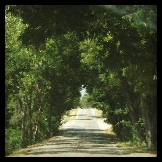 It's fun to drive through a tunnel of trees (photo by Tui Snider)