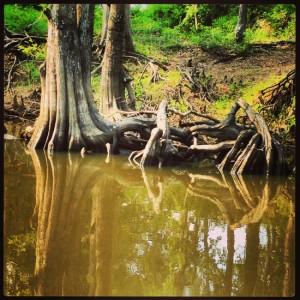 Reflections on the Jefferson Texas bayou tour (photo by Tui Snider)