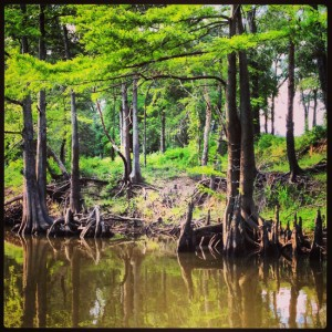 Reflections on the Jefferson Texas bayou tour (photo by Tui Snider)