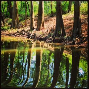 Reflections along the Jefferson Texas bayou tour (Tui Snider)