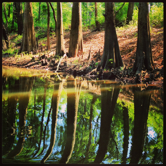 Reflections along the Jefferson Texas bayou tour (Tui Snider)