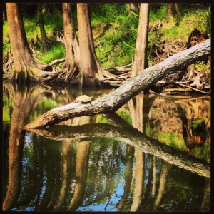 Jefferson, Texas bayou reflections with a turtle (photo by Tui Snider)