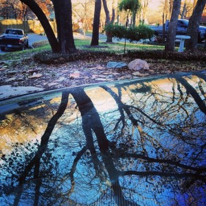 Oak trees reflected in our car's windshield (photo by Tui Snider)