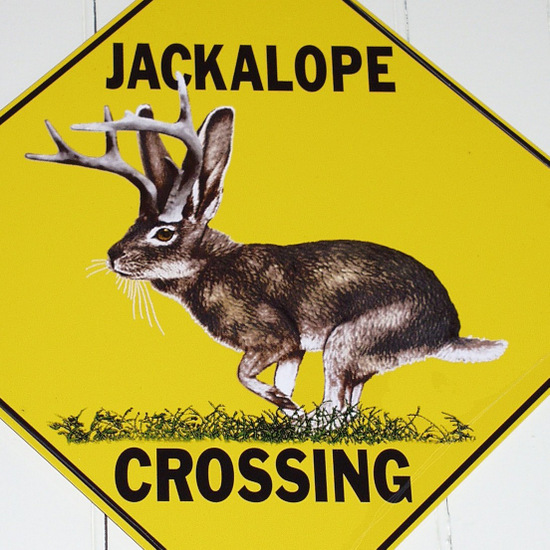 "Jackalope photo by David ""Sumoflam"" Kravetz"