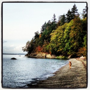 Deer at the beach (photo by Tui Snider)