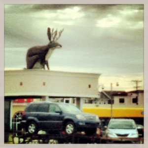 Rooftop Jackalope in Fort Worth, TX (photo by Tui Snider)