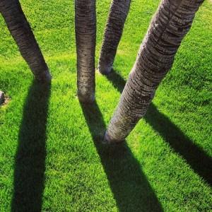 Palm tree shadows (photo by Tui Snider)