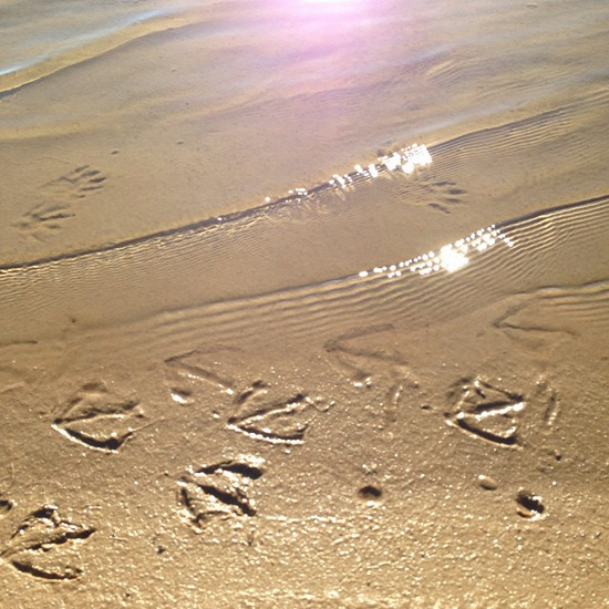 Bird footprints at the lakeside beach (photo by Tui Snider)