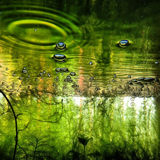 Reflections in my aquarium (photo by Tui Snider)