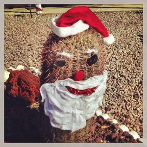 Arizona Cactus wearing a Santa Hat (photo by Tui Snider)