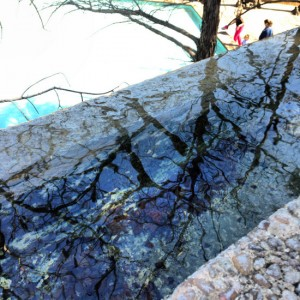 Tree reflections at the Fort Worth Water Gardens (photo by Tui Snider)