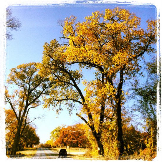 Yellow leaves in Texas (photo by Tui Snider)