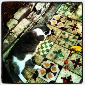 Hemingway cat in Key West, Florida (photo by Tui Snider)