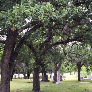 Beautiful trees at Elmwood Cemetery in Mineral Wells, Texas (photo by Tui Snider)