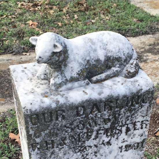 Baby lamb on a historic cemetery headstone (photo by Tui Snider)