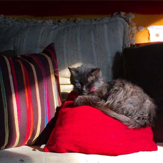 My beloved cat, Ms Kalliope (photo by Tui Snider)