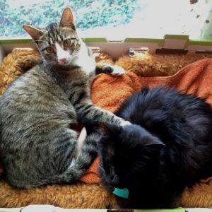 My furry writing companions! (photo by Tui Snider)