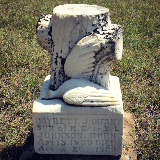 (c) Tui Snider - Dead dove with broken wing