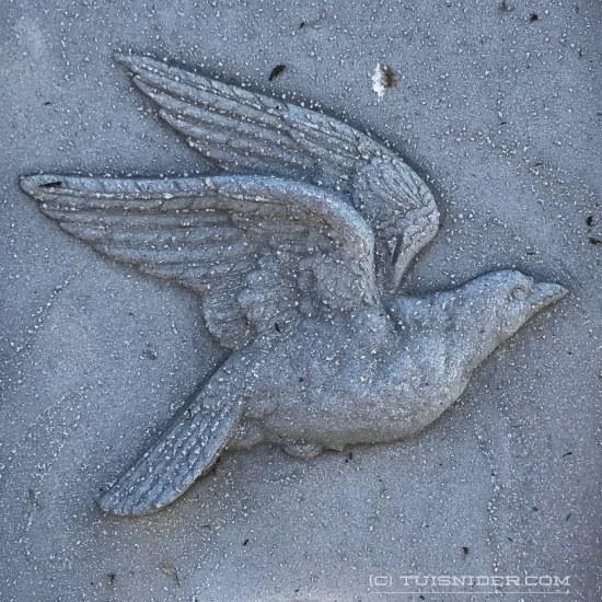 (c) Tui Snider - Dove flying upwards