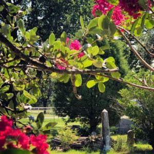 (c) Tui Snider - Garden cemeteries often contain heritage plants