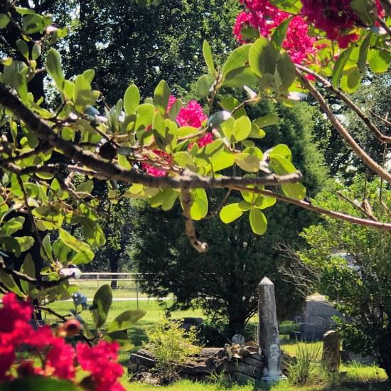 (c) Tui Snider - Garden cemeteries often contain heritage plants