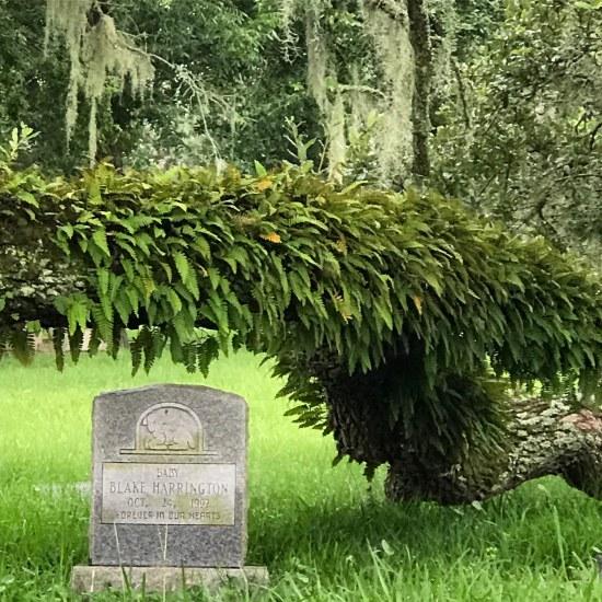 (c) Tui Snider - Old Biloxi City Cemetery
